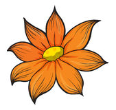 An orange flower. Illustration of an orange flower on a white background Stock Image