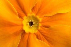Orange flower inside Stock Photos