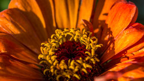 Orange flower. Lighten up by the sunrise royalty free stock photo