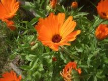 Orange flower. Little orange flower mediatheque after rain Stock Photo