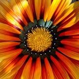 Orange flower. With little white heart Stock Images