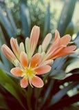Orange flower. On a lush green background Royalty Free Stock Image