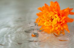 Orange flower lying in water in a rainy day Royalty Free Stock Images