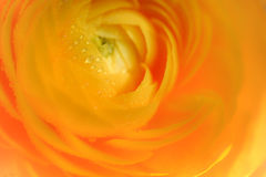 Orange flower Stock Photo