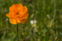Orange flower meadow closeup Royalty Free Stock Photo