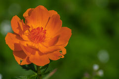 Orange flower meadow closeup Stock Photos