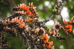 Orange flower in nature Royalty Free Stock Photos