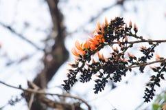 Orange flower in nature Royalty Free Stock Image