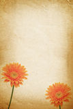Orange flower and old paper Stock Photography