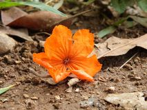 Orange, Flower, Orange Brown, Green Royalty Free Stock Image
