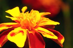 Orange flower over blurred background Stock Photos