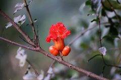 Orange flower. Peculiar orange colour flower. Nature photography.  Branch. Plants. Flora and fauna.  Leaf Stock Photo