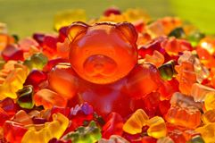 Orange, Flower, Petal, Close Up Royalty Free Stock Image