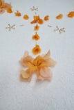 Orange flower petal design Stock Image