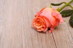 Orange flower or a rose Stock Photo