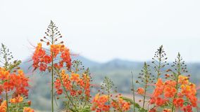 Orange flower that sway in the wind in garden background mountains
