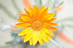 Orange Flower, Top View with Blurred Background Royalty Free Stock Photos
