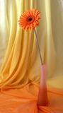 Orange flower in a vase Royalty Free Stock Photography