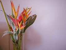 Orange flower in vase Royalty Free Stock Photography