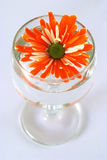 Orange flower in water Royalty Free Stock Photography