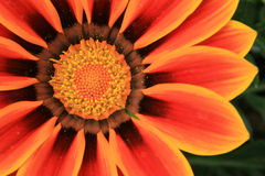 Orange Flower wedding reception Royalty Free Stock Photos