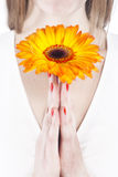 Orange flower in woman`s hands Stock Image