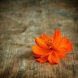 Orange flower on wood. En background Royalty Free Stock Photo