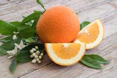 Orange and flowering branch. Stock Photo