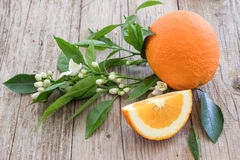 Orange and flowering branch. Royalty Free Stock Photography