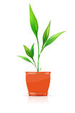 Orange flowerpot with growing plant Stock Photos