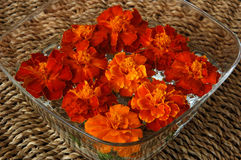 Orange flowers. A vase of orange and yellow marigold flowers Royalty Free Stock Photography