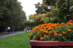 Orange flowers. In the city of Moscow Royalty Free Stock Images