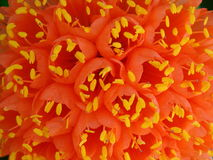 Orange Flowers. A background view with a closeup of beautiful orange flowers Royalty Free Stock Photo