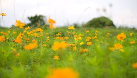 Orange flowers. (Forest of Flowers Stock Photos
