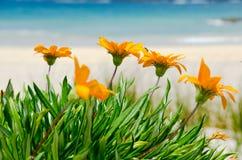 Free Orange Flowers Royalty Free Stock Photo - 22124025