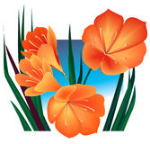 Orange flowers. Arrangement over a blue square Royalty Free Stock Photos