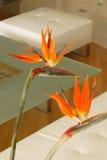 Orange flowers. Flowers in luxury apatment royalty free stock image