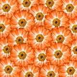 Orange flowers background Royalty Free Stock Image