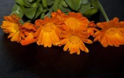 Orange flowers on a black background Stock Photos