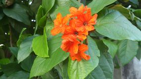 Orange flowers on branch Royalty Free Stock Images