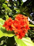 Orange flowers Royalty Free Stock Photos