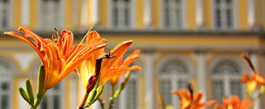 Orange Flowers Beside Buildings during Daytime Stock Photo