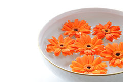 Orange flowers floating in a bowl with water Royalty Free Stock Photography