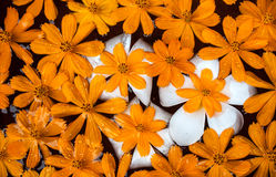 Orange flowers floating on water Stock Photos