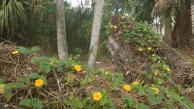 Orange flowers, Florida woodland. Orange flowers and green leaves covering dead logs royalty free stock photography
