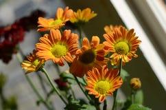 Orange Flowers. Orange flower next to the window royalty free stock photography