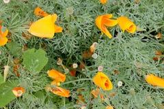 Orange flowers. In the garden Stock Photos