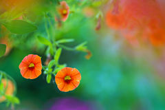 Orange flowers in a garden Stock Photo