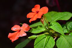 Orange flowers stock photo