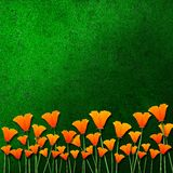 Orange flowers on green grass Stock Photography